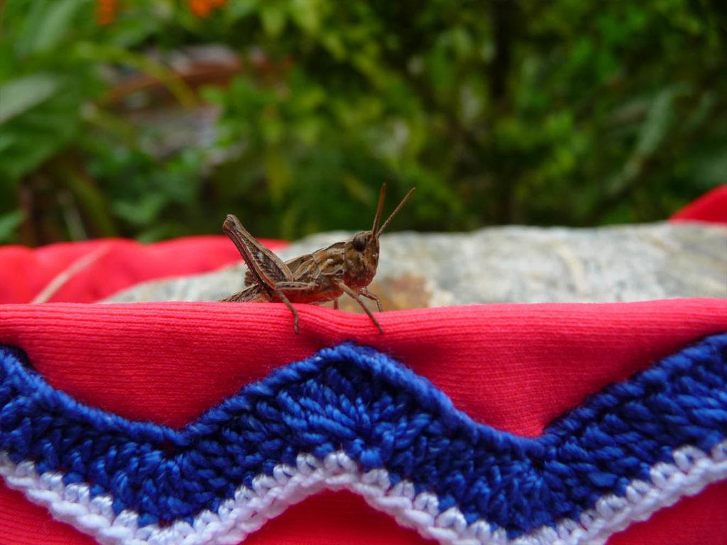 grasshopper on handmade anklet